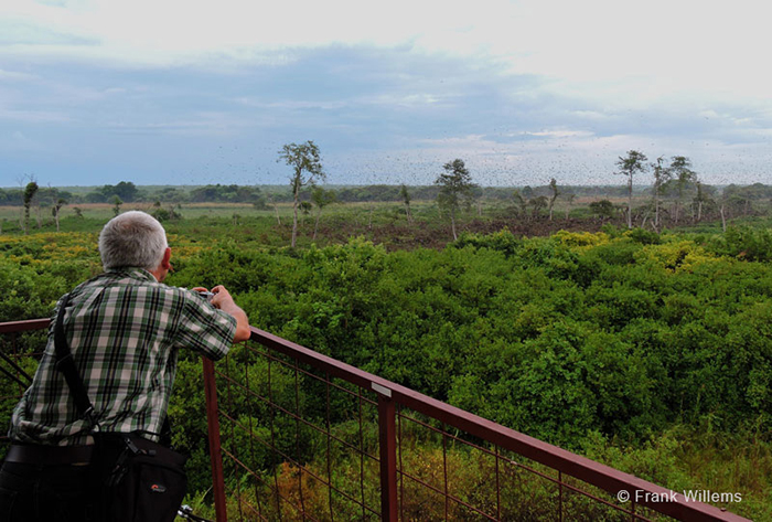 kasanka-bat-migration-lookout