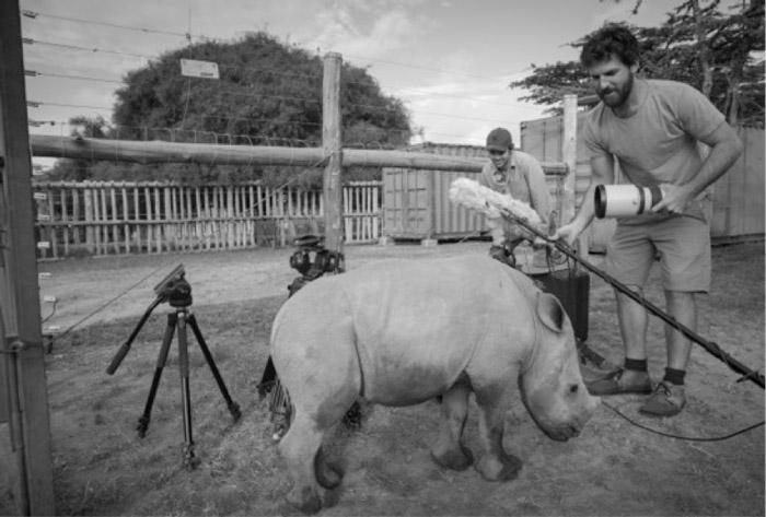 kenya-ol-pejeta-rhinos