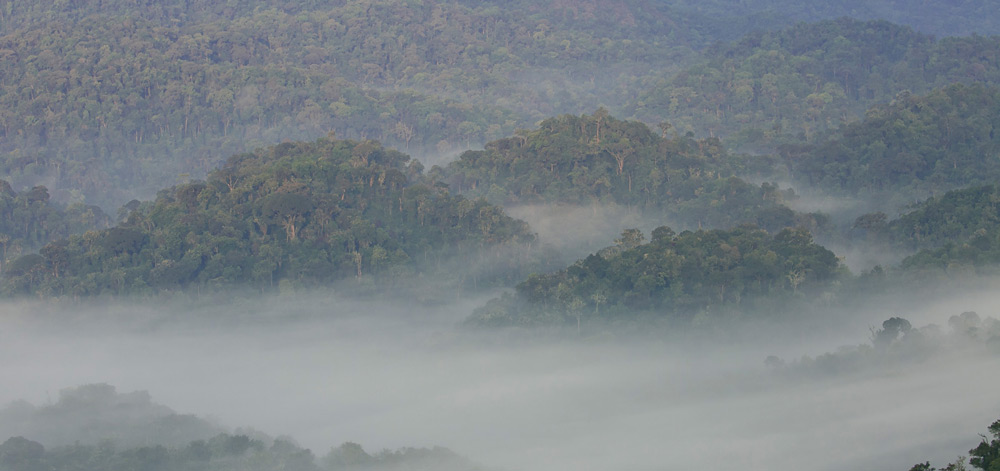 The mists of Nyungwe National Park ©Christian Boix