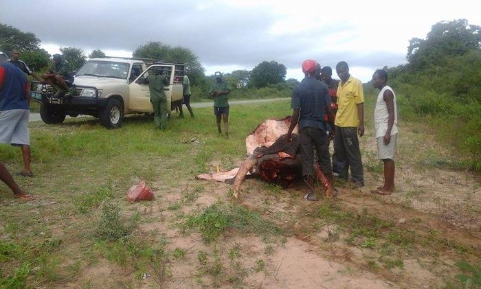 poaching-okavango
