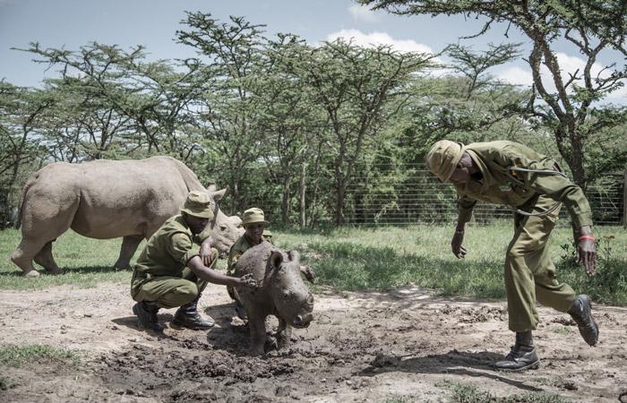 rescued-rhino