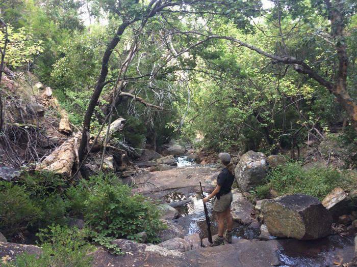 trails-lodge-walk-elephant-elephants-gorge-trail-foot