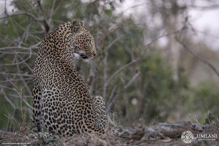 leopard-watches-hyena