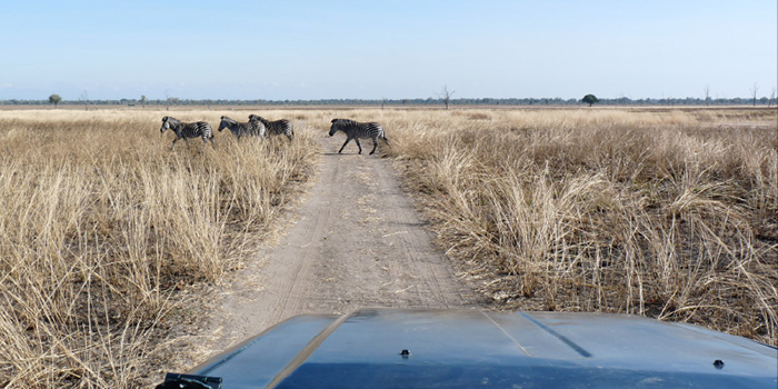 Exclusive, South Luangwa