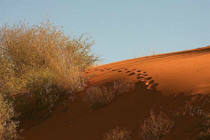 Red-sand-of-the-Kalahari