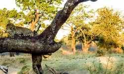 Leopards-and-Hyena-feature