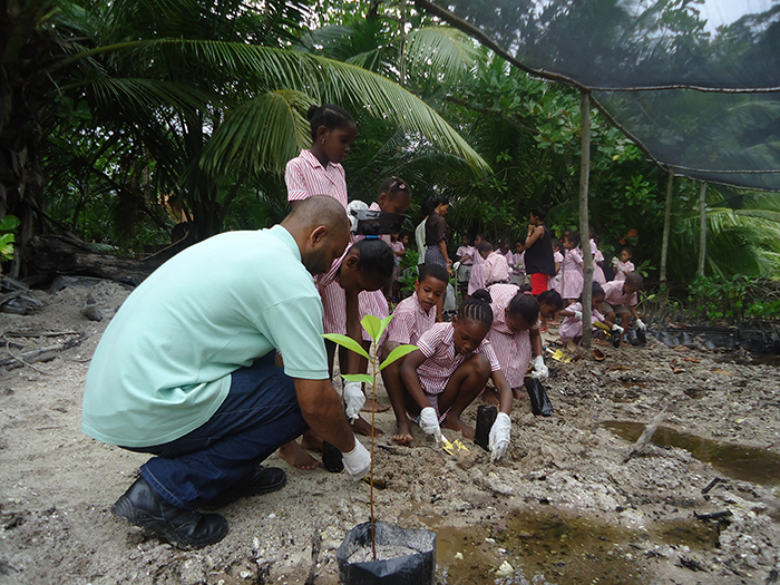 School kids getting involved in the mangrove replanting project