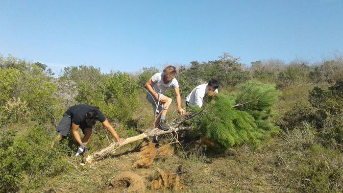 alien-vegetation-clearing-jarrett-joubert