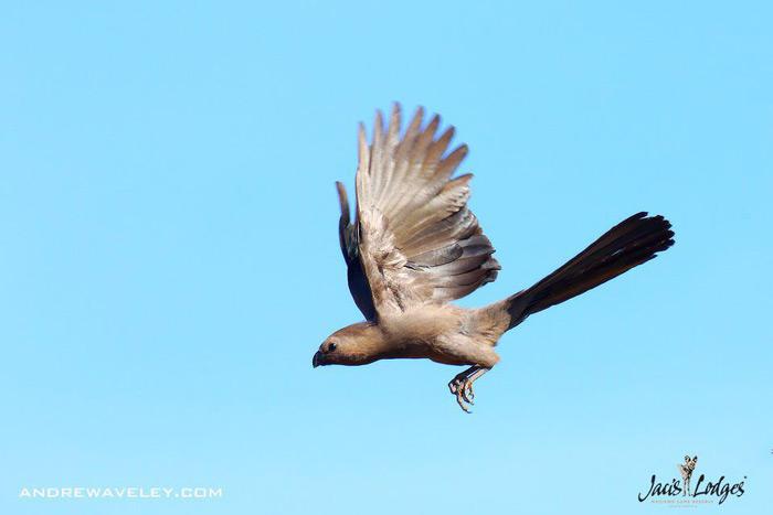 birdlife-madikwe