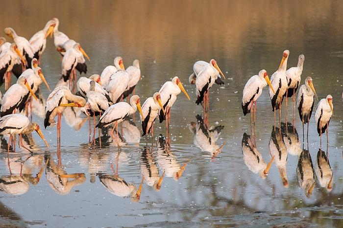birds-on-water-safari-in-luangwa
