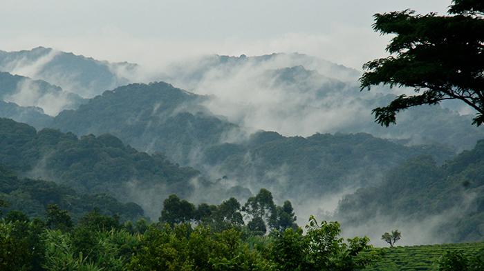 gorilla-trekking-in-bwindi-misty-jungle