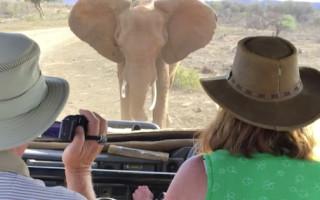 elephant-charging-madikwe-south-africa