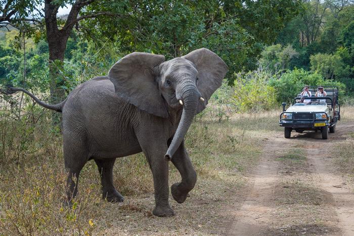 elephant-game-vehicle