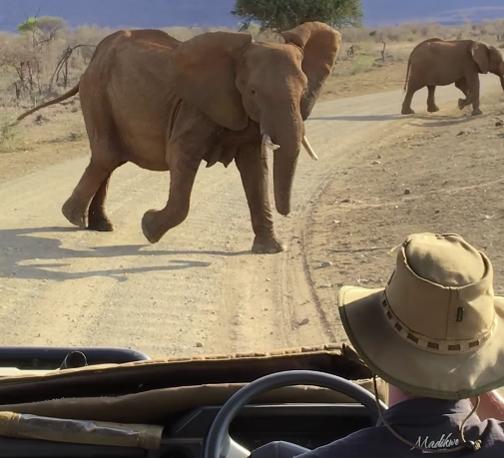 elephant-madikwe