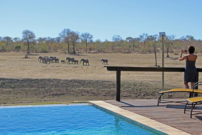 elephants-arathusa
