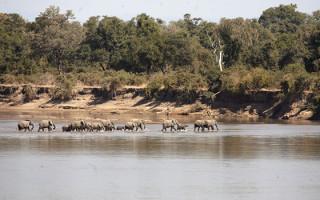 elephants-crossing-the-river