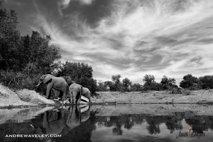 elephants-madikwe