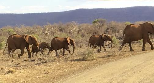 elephants-madikwe