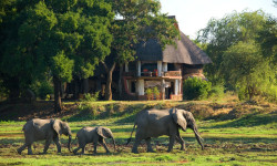elephants-walking-by-lodge