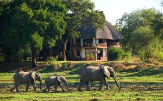 elephants-walking-by-lodge