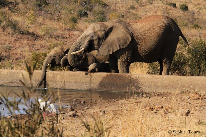 elephants-waterhole-pilanesberg