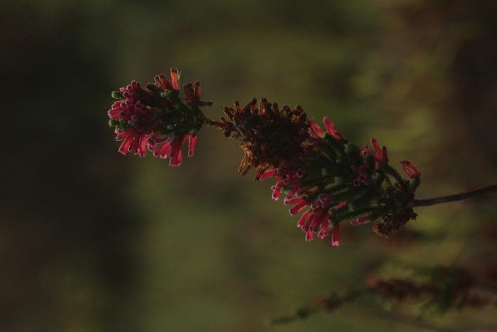 flora-tokai