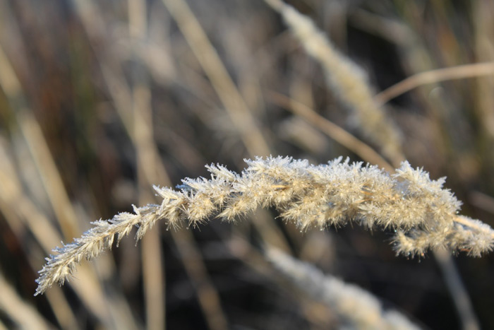 frosty-mornings-benfontein-nature-reserve