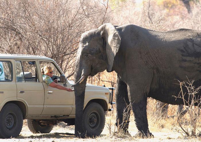 gentle-elephant