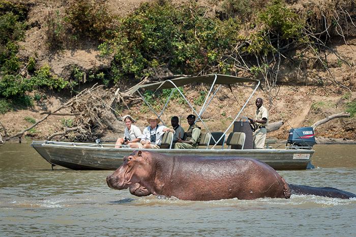 hippos-on-a-water-safari