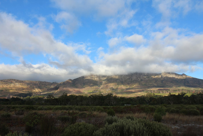 The beautiful Tokai Park in Cape Town, South Africa