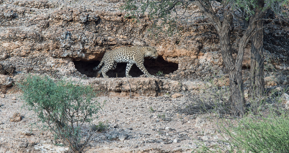 leopard-cave-opening