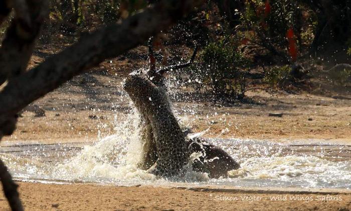 leopard-kill-kruger