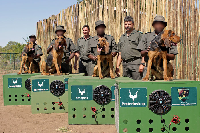 new-dogs-kruger-canine-unit