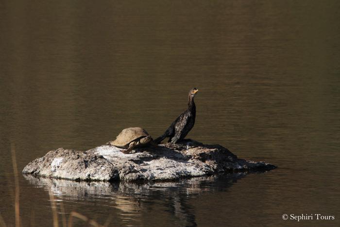 pilanesberg-birdlife