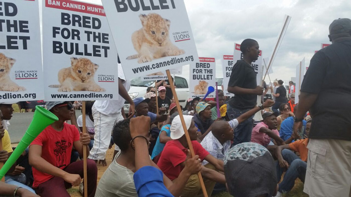 protest-canned-lion-hunting
