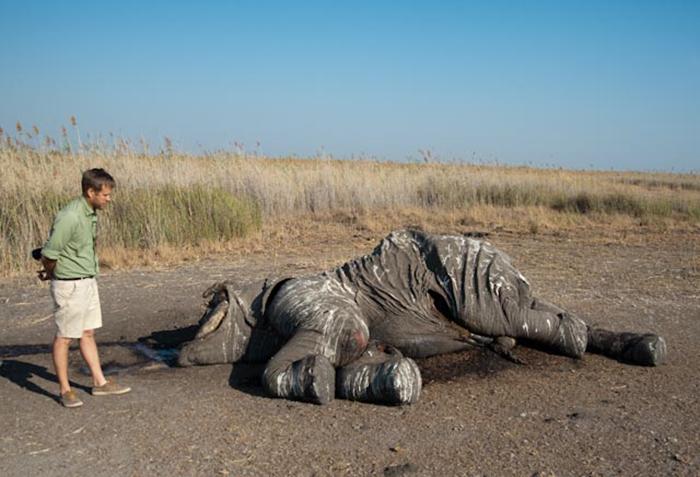 ranger-with-dead-elephant