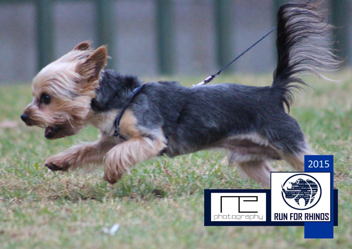 run4rhinos-dog-run