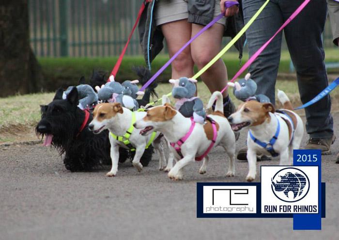 run4rhinos-dogs