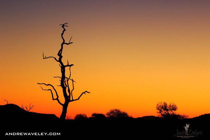 sunset-silhouette-madikwe