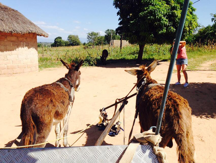 traditional-village-transport-donkey-cart
