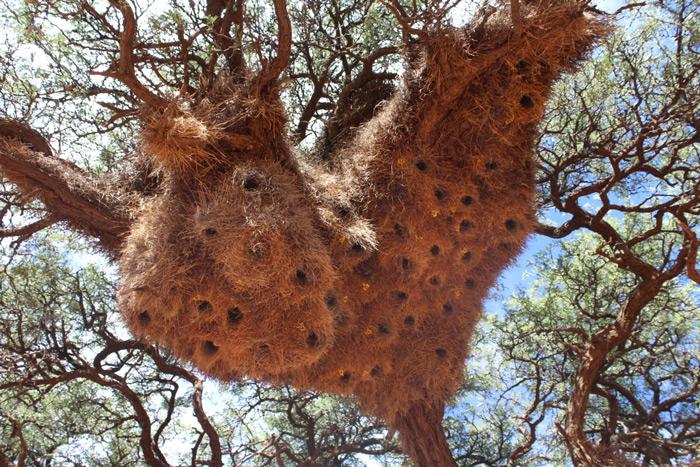 weavers-nest-benfontein-nature-reserve