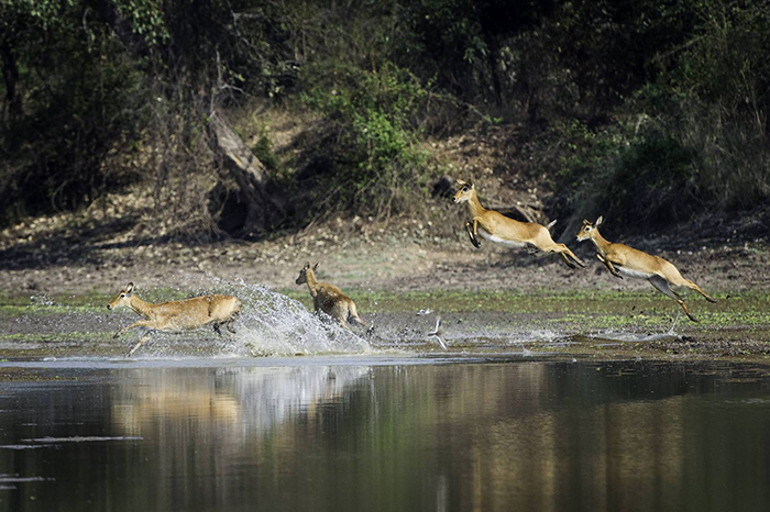 wildlife-on-water-safari