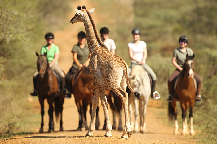 a-giraffe-crossing-in-front-of-the-horse-riders-pakamisa