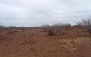 dry-plains