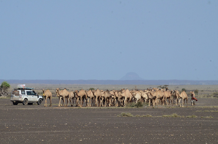 gabra-with-their-camels-near-lake-turkana