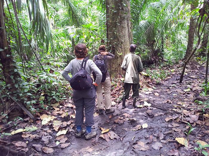 gorilla-trekking-in-uganda-and-rwanda