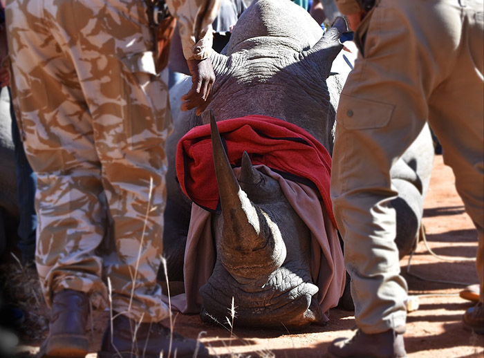 Karongwe_Dustins Greenhouse rhino conservation project_Samantha Davies (3)