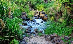 Mzima Springs 2