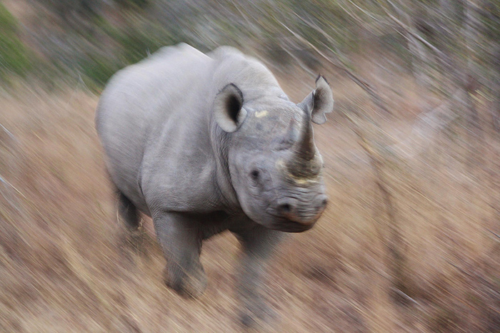 rhino-charge-at-kruger-national-park