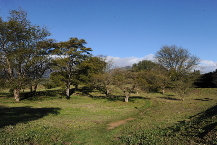 paarl-arboretum-1